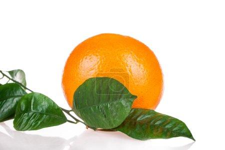 Photo pour Ail frais avec du persil isolé sur blanc - image libre de droit