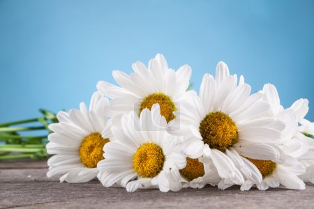 Leucanthemum vulgare on a wooden table
