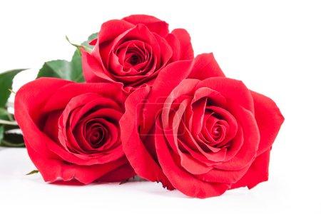 Photo pour Roses rouges sur fond blanc - image libre de droit