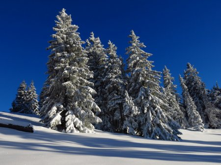 Wintery forest in the Alps