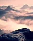 Dreamy misty forest  landscape. Majestic peaks of old trees  cut lighting mist. Deep valley is full of colorful fog