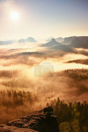 Photo pour Paysage forestier brumeux de rêve. Des sommets majestueux de vieux arbres coupent la brume lumineuse. La vallée profonde est pleine de brouillard coloré et les collines rocheuses collent au soleil . - image libre de droit
