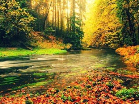 Pierreuse Banque d'automne torrent de montagne couvert de hêtre orange laisse. Les feuilles vertes fraîches sur les branches au-dessus de l'eau faire réflexion colorée au niveau