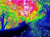 Thermal photo of footpath in autumn forest. Leaves on the ground in changed colors. Photography in spectrum of invisible light.