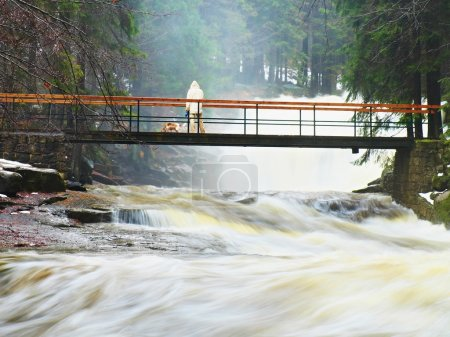 Man with dog on bridge above troubled water. Huge stream of rushing water masses below small footbridge. Fear of floods. High cascade in forest