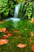 Kaskáda na malé horské bystřiny, voda je běh přes mechem obrostlé balvany do postele a pohyb s čerstvé zelené řasy