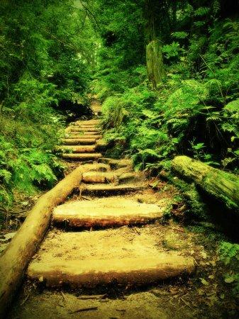 Photo pour Vieux escaliers en bois dans le jardin, sentier de touriste envahi par la végétation forestière. pas de troncs de hêtre coupé, fraîches branches au-dessus de sentier - image libre de droit