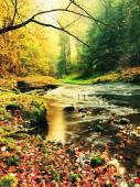 """Постер, картина, фотообои """"Горная река с низким уровнем воды, гравий с красочными бук, осина, клен листья. Свежий зеленый замшелых камней и валунов на берегу реки. Дождливый день."""""""