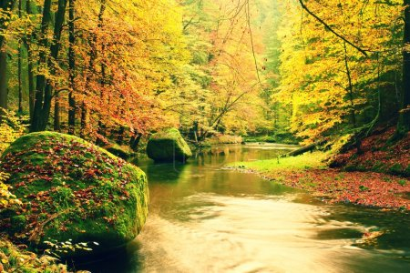 Big boulders with fallen leaves. Autumn mountain river banks. Fresh green mossy boulders and river banks covered with colorful leaves