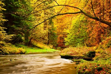 Photo for View into autumn mountain river with blurred waves,, fresh green mossy stones and boulders on river bank covered with colorful leaves from maples, beeches or aspens tree. - Royalty Free Image