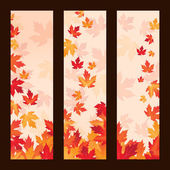 set of vector frames with autumn maple leaves