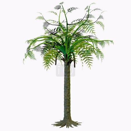Photo pour Alethopteris zeilleri est un arbre de morphoespèce foliaire issu d'une plante médullosaléenne qui poussait largement dans le Permien Stephanien et le Permien précoce de la Laurasie tropicale. - image libre de droit