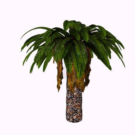 Photo pour Bjuvia simplex est une plante cycadale au motif foliaire simple qui ressemble à celui de Taeniopteris, une fougère arborescente archaïque. . - image libre de droit