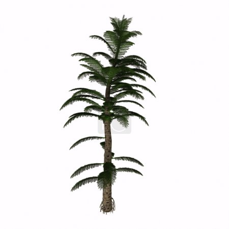 Photo pour Les calamites sont un type de plante de prêle qui vivait dans les marécages houillers de la période carbonifère. Ils étaient des parents préhistoriques de la queue de cheval moderne, mais ressemblait plus à un pin et a grandi jusqu'à 40 à 100 pieds . - image libre de droit