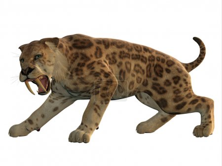 Saber-Tooth Cat Angry