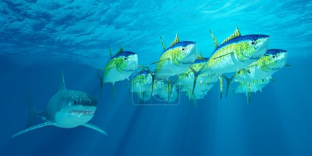 A school of Yellowfin tuna is followed by a Great ...