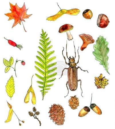 Photo pour Grand ensemble d'objets forestiers dessin par aquarelle, graines, feuilles, brindilles, cônes de pin, illustration de peinture artistique dessinée à la main - image libre de droit