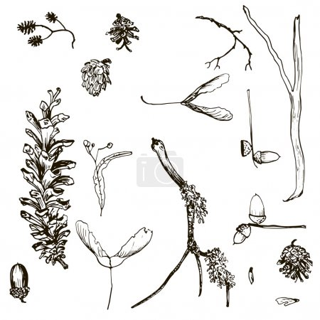 vector set of twigs, pine cones, seeds and acorns