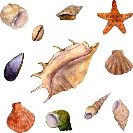 Illustration for Vector set of watercolor drawning shells, starfish and seashells isolated at white background,  hand drawn watercolor illustration - Royalty Free Image