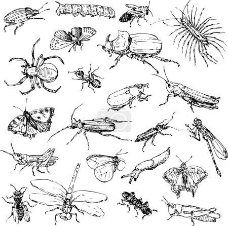 Illustration pour Jeu d'insectes dessinateurs, illustration vectorielle dessinée à la main - image libre de droit