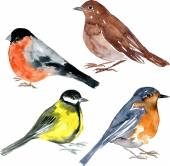 Set of watercolor drawing birdsbullfinch nightingale tit and robin at white background hand drawn vector illustration