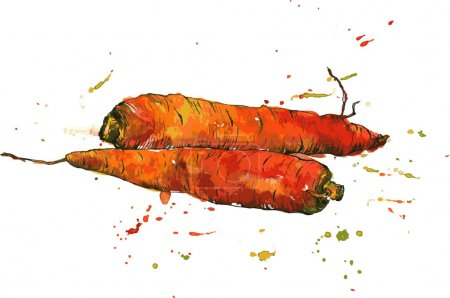 Illustration pour Carottes, dessin à l'encre et aquarelle avec des taches de peinture, légumes dessinés à la main, éléments de design vintage, illustration vectorielle vintage dessinée à la main - image libre de droit