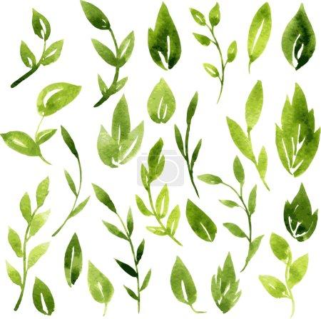 Illustration pour Jeu de branches et feuilles vectorielles aquarelle verte, éléments de conception vectoriels dessinés à la main - image libre de droit