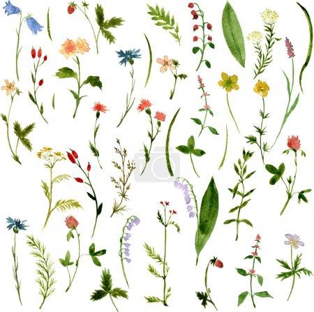 Aquarell-Zeichnung von Kräutern und Blumen