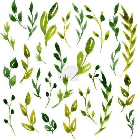 Illustration for Set of vector watercolor green branches and leaves, hand drawn vector design elements - Royalty Free Image