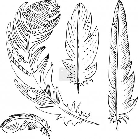 Illustration for Set of line drawing decorative feathers, hand drawn vector illustration - Royalty Free Image