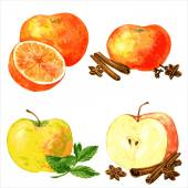 Vector set of different fruits and spices four food composition painting by watercolor apples and oranges and cinnamon sticks anise seeds and mint leaves drawing by aquarelle at white background
