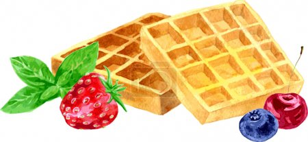 watercolor vector wafers and berries
