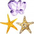 Watercolor sea souvenir, two sea stars and coral b...