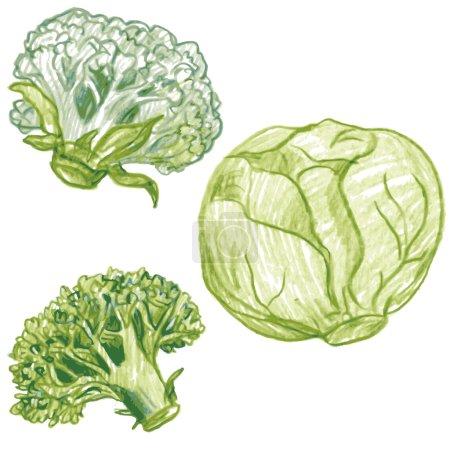 Illustration pour Jeu vectoriel de légumes gribouillis dessin au crayon de couleur, chou isolé, chou-fleur et brocoli, éléments vectoriels dessinés à la main - image libre de droit