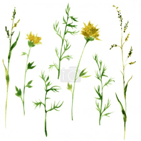 Illustration for Set of watercolor drawing wild flowers, herbs and twigs, painted  wild plants, color drawing floral set, hand drawn vector illustration - Royalty Free Image