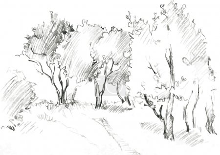 grove of deciduous trees