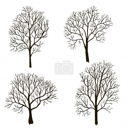 trees without leaves silhouette