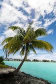 Palm Bora Bora island French Polynesia