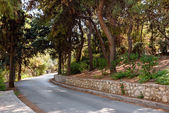 Road through cedar forest to Lycabettus hill in Athens