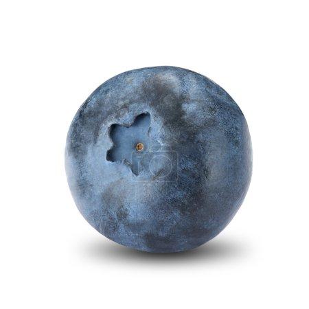 Fresh Blueberry On White