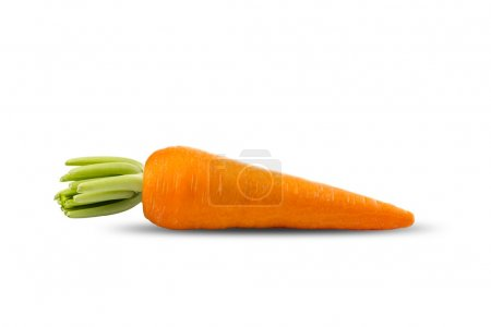 Fresh Carrot on White