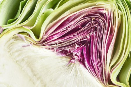 Close up detail of a fresh cut artichoke