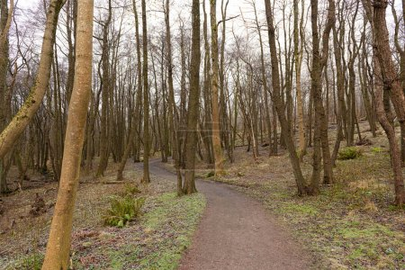 Photo for Gravel path through naked trees in winter.. - Royalty Free Image