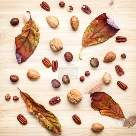 Different kinds of nuts walnuts kernels ,hazelnuts, almond kerne