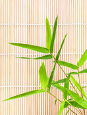 Fresh bamboo leaves border with water drop