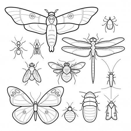 Illustration pour Insectes papillon, papillon de nuit, libellule, abeille, mouche, papillon de nuit, cafards, punaises de lit, acariens, fourmis, moustiques, poissons argentés. Ensemble d'insectes vecteurs. Collection d'insectes dans un style moderne ligne mono. Noir et blanc . - image libre de droit