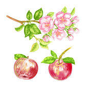 Vector seamless pattern with apple blossom