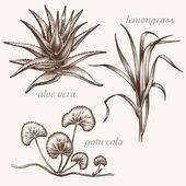 Set of medical herbs