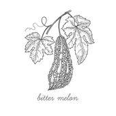 Medical plant Bitter melon