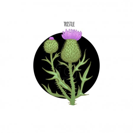 Image of plant thistle